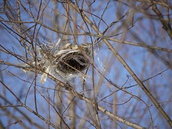 鳥の巣も現代調